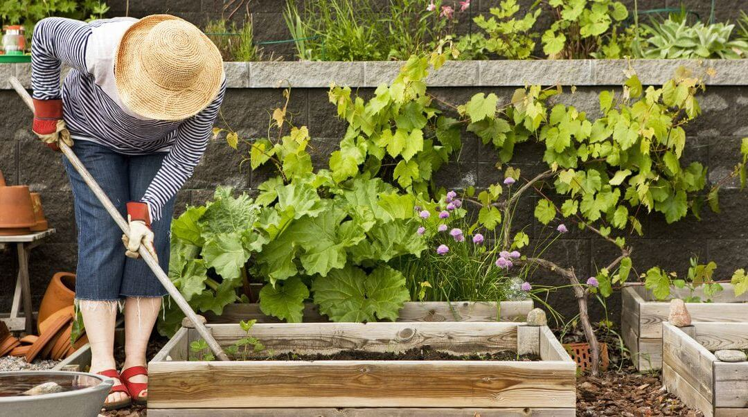 5 Gardening Tips for Beginners