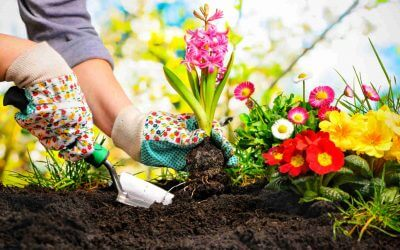Best Ways To Start Your Garden – 5 Quick Tips