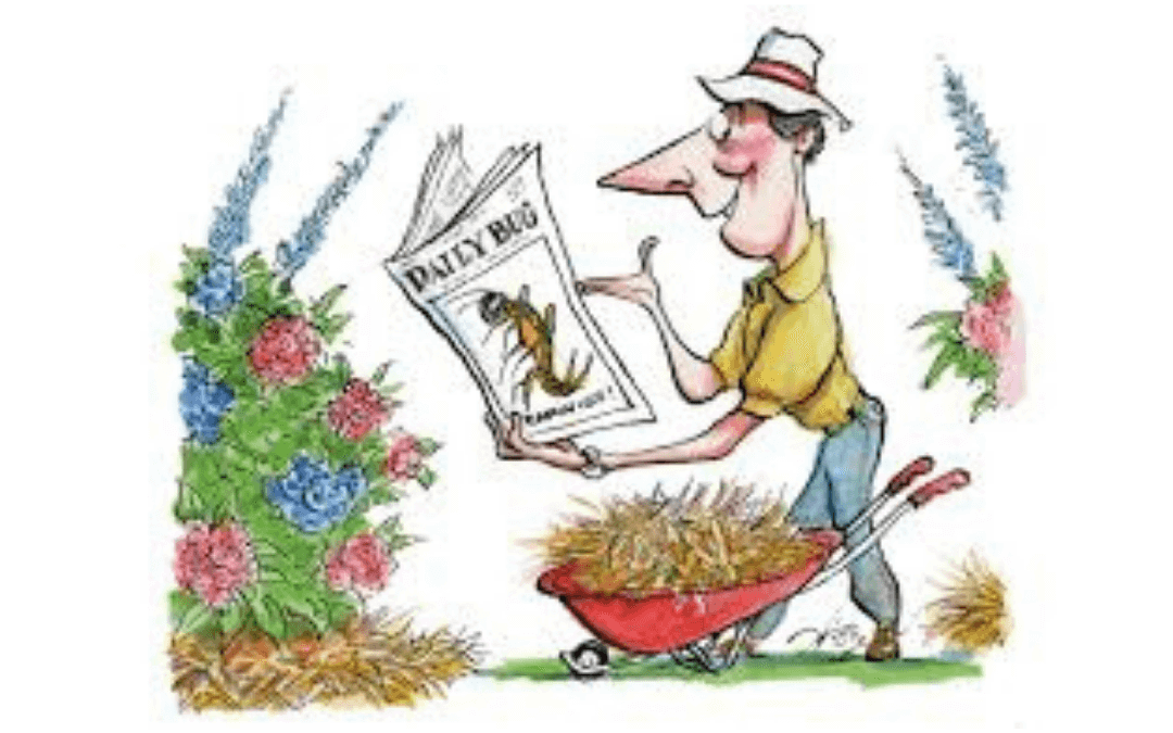 Why You Should Be Using Newspapers In Your Garden