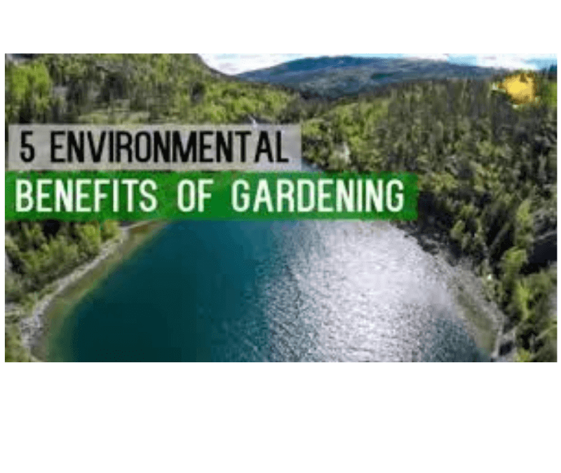Why Gardening Is Good For The Environment – 5 Quick Tips