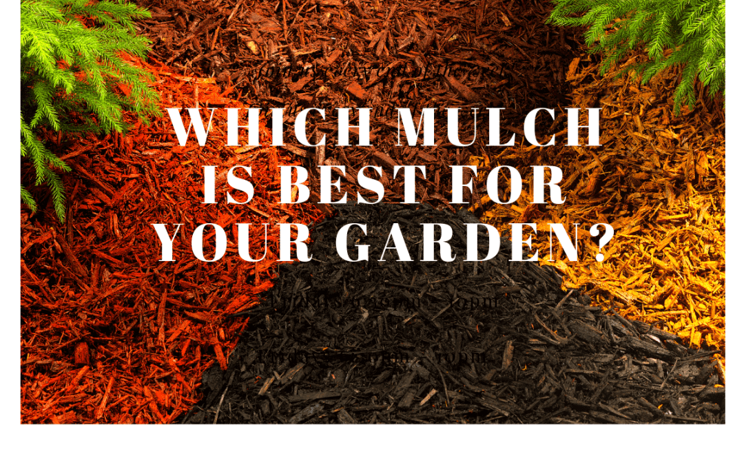 Whats The Best Type Of Mulch For Your Garden?