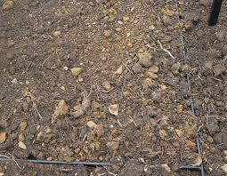 no bare soil prevent weeds gardening tips